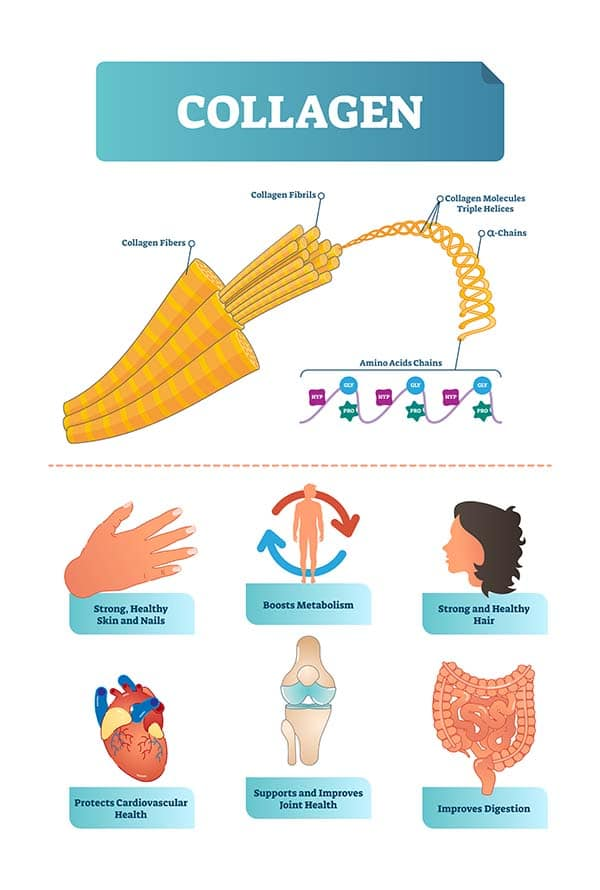 Vector illustration about collagen. Metabolism and cardiovascular health diagram. Medical scheme with fibers, fibrils, molecules, helices, alpha and amino acids chains with HYP and GLY visualizations