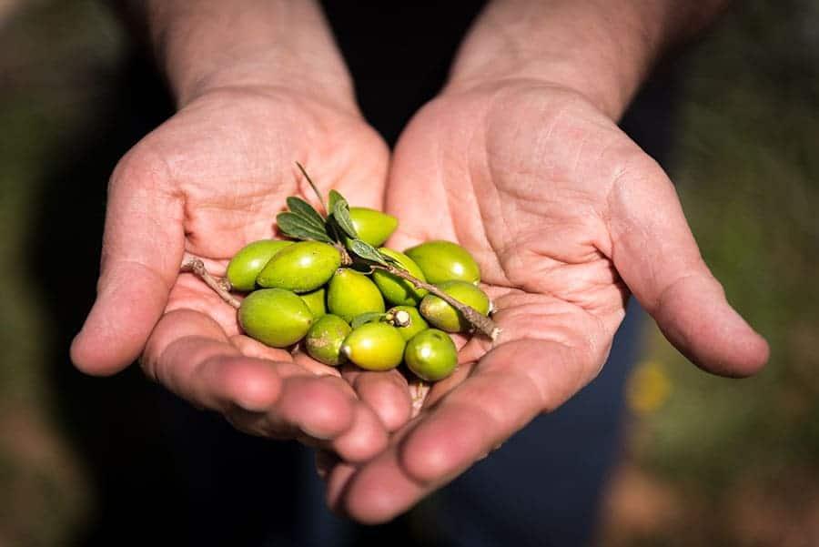 зелени арганови семена, събрани в шепа