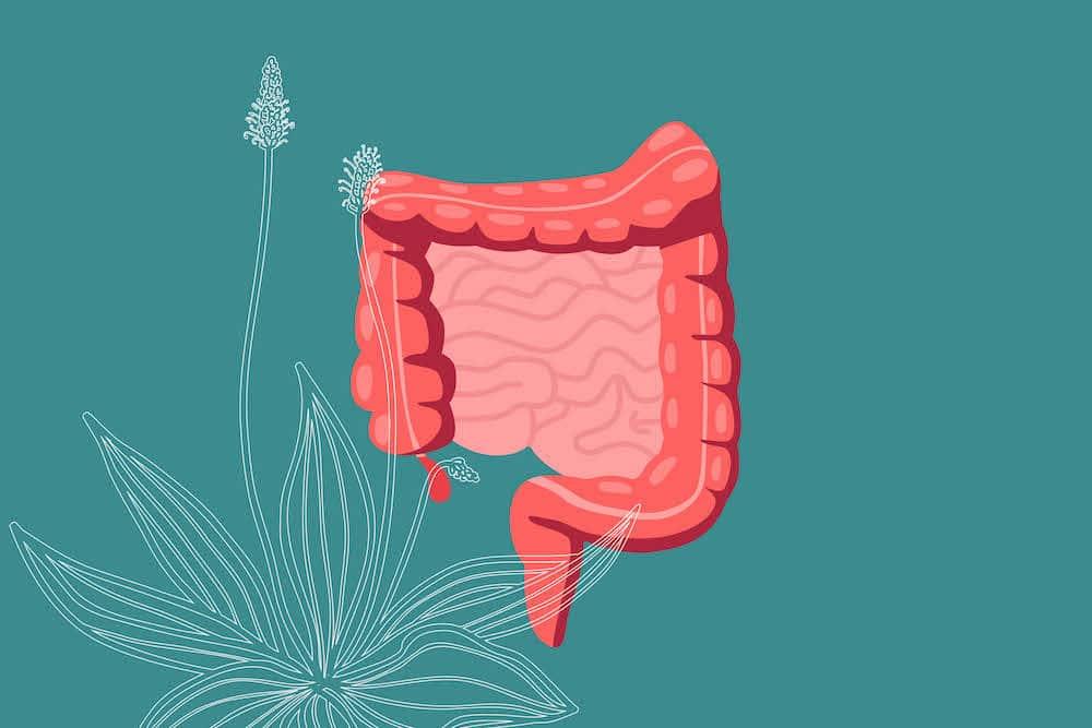 Влияние на хуск върху храносмилателната система.