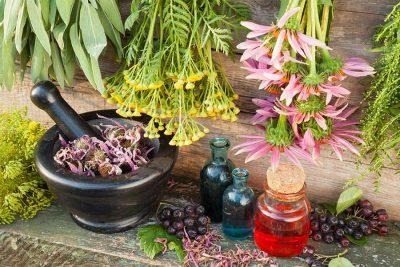 Дървена маса с разнообразие от билки. Пресни билки, сушени билки, окачени или смлени.
