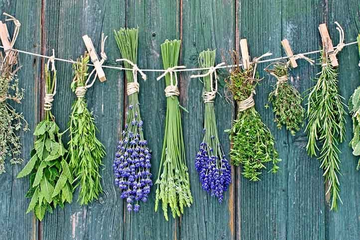 Various fresh herbs hanging on a leash in front of a wooden wall