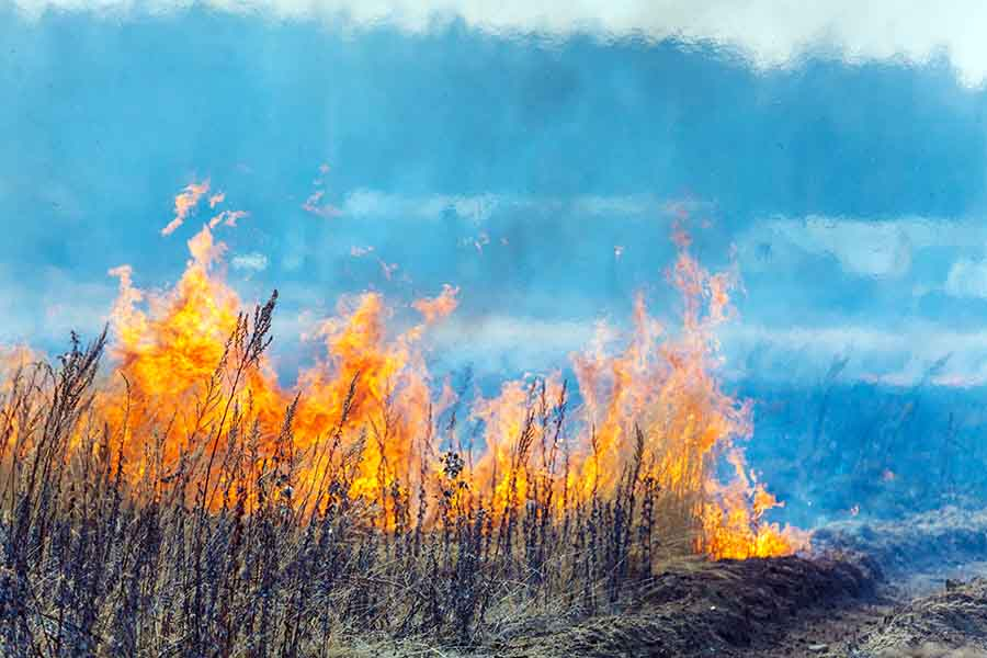 Dry Grass Field Fire Disaster