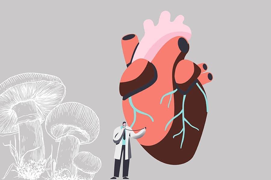 Влияние на гъби шийтаке върху здравето на сърцето.
